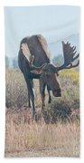 Head Lowered Bull Moose Beach Towel