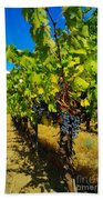 Heavy On The Vine At The High Tower Winery  Beach Towel