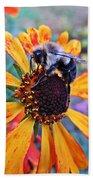 Helenium Bumble Bee Beach Towel