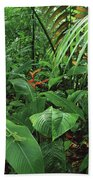Heliconia And Palms With Green Anole Beach Towel