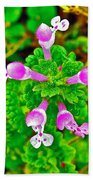 Henbit At Chickasaw Village Site At Mile 262 Of Natchez Trace Parkway-mississippi Beach Towel