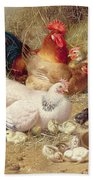 Hens Roosting With Their Chickens Beach Towel