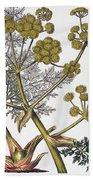 Herbal: Fennel, 1819 Beach Towel