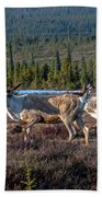 Herd Of Broad Pass Beach Towel