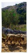 Herd Of Sheep In Tuscany Beach Towel