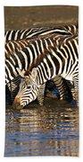 Herd Of Zebras Drinking Water Beach Towel