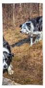 Herder And Herded Beach Towel