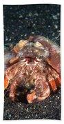 Hermit Crab With Anemone Beach Sheet