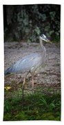 Heron 14-6 Beach Towel