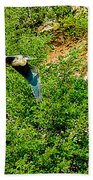 Heron Flies Over Oak Creek In Red Rock State Park Sedona Arizona Beach Towel