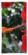 Hibiscus 2685 Beach Towel