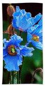 Himalayan Blue Poppy Flower Beach Towel