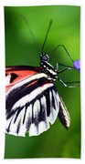 Hint Of Red Butterfly Beach Towel