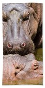 Hippopotamus In Water Beach Sheet