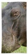 Hippopotamus Okavango Delta Botswana Beach Towel