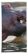 Hippopotamus  Beach Towel