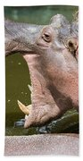 Hippopotamus With Open Mouth Beach Towel