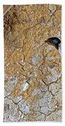 Hirondelle De Cheminee Hirundo Rustica Beach Towel