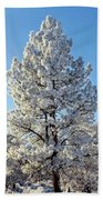 Hoar Frost Ponderos Pine Tree, Sundance Beach Towel
