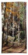 Hocking Hills Trees Beach Towel