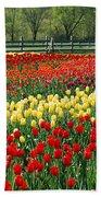 Holland Tulip Fields Beach Towel