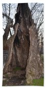 Hollow Tree At Mather Mill Beach Towel