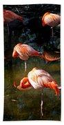Homosassa Springs Flamingos 5 Beach Towel