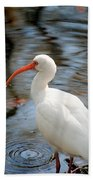 Homosassa Springs Ibis 1 Beach Towel