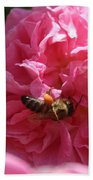 Honey Bee Collecting Pollen On A Pink Rose Beach Towel