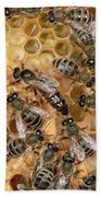 Honey Bee Queen And Colony On Honeycomb Beach Towel