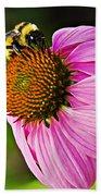 Honeybee On Echinacea Flower Beach Towel