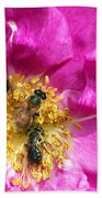 Honeybees On Pink Rose Beach Towel