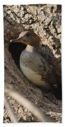 Hooded Merganser Getting Ready To Fly Beach Towel
