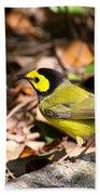 Hooded Warbler - Img_9349-001 Beach Sheet