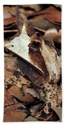 Horned Frog Camouflaged In Leaf Litter Beach Towel
