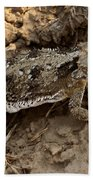 Horned Lizard   #8888 Beach Towel
