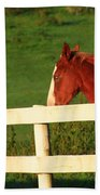 Horse And White Fence Beach Towel