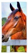 Horse Closeup Beach Towel