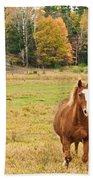 Horse In Field-fall Beach Towel