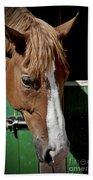 Horse Portrait Beach Towel