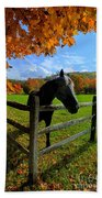 Horse Under Tree By Fence Beach Towel