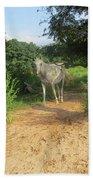 Horse Walks Toward Camera Beach Towel