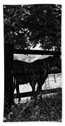 Horses By The Fence Beach Towel