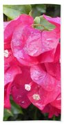 Hot Pink Bougainvillea Beach Towel
