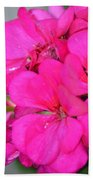 Hot Pink In February Beach Towel