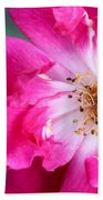 Hot Pink Rose Beach Towel