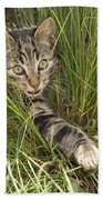 House Cat Hunting In Grass Germany Beach Towel