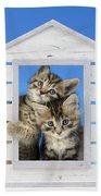 House Of Kittens Ck528 Beach Towel