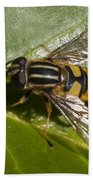 Hoverfly Beach Towel