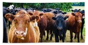 How Now Brown Cow Beach Sheet